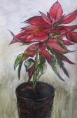 Poinsettia Inktense 50 x 40 cm $200