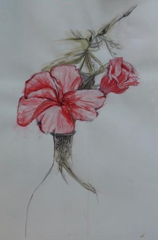 Hibiscus Inktense 50 x 40cm $100 framed