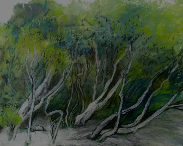 Tokuremoar wetlands Oil, oil pastel and charcoal 27 x 33 cm